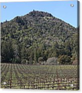 California Vineyards In Late Winter Just Before The Bloom 5d22142 Acrylic Print