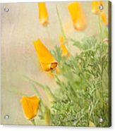 California's Poppy Acrylic Print