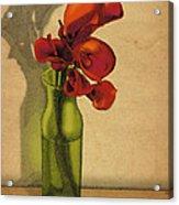 Calla Lilies In Bloom Acrylic Print