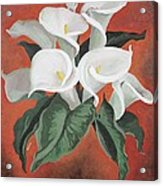 Calla Lilies On A Red Background Acrylic Print
