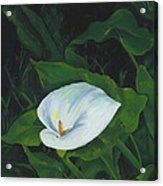 Calla Lily in the Garden of Diego and Frida Acrylic Print
