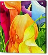 Calla Lily Rainbow Acrylic Print by Janis Grau