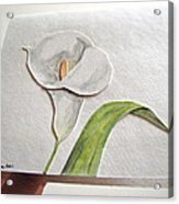 Callalilly Card - Image Two Acrylic Print
