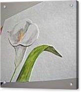 Callalily Card - Image Three Acrylic Print