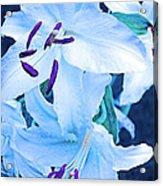 Calming Lily Acrylic Print