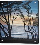 Cambria Cypress Trees At Sunset Acrylic Print
