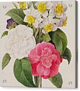 Camellias Narcissus And Pansies Acrylic Print