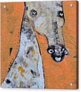 Camelopardus Acrylic Print