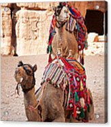 Camels In Petra Acrylic Print by Jane Rix