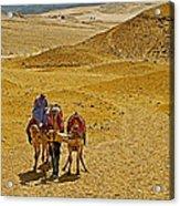 Camels Nuzzling On The Giza Plateau-egypt  Acrylic Print