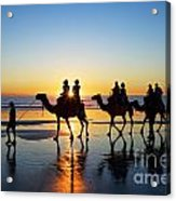 Camels On The Beach Broome Western Australia Acrylic Print by Colin and Linda McKie