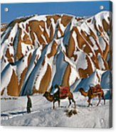 Camels On The Snow Acrylic Print