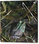 Camo Frog Ninja Acrylic Print