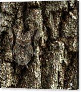 Camo Moth Acrylic Print