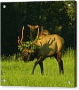 Camoflaged Elk With Shadows Acrylic Print