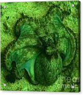 Camoflauged Octopus Acrylic Print