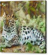 Camouflage Cat Acrylic Print