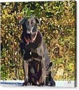 Camouflage Labrador - Black Dog - Retriever Acrylic Print
