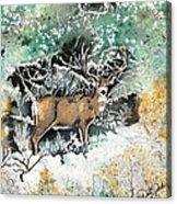 Camouflaged Mule Deer Buck In Winter Acrylic Print