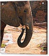 Camouflaged Elephant Acrylic Print
