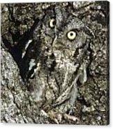 Camouflaged Screech Owl Acrylic Print