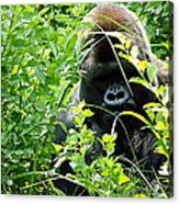 Can I Help You? Acrylic Print