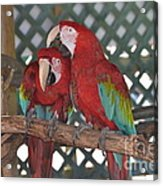 Can You Get That Itch For Me? Acrylic Print