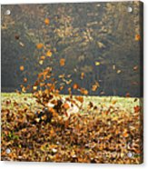 Can You See Me? Acrylic Print