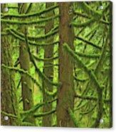 Canada, British Columbia, Mcmillan Acrylic Print