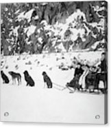 Canada Dog Sled, C1910 Acrylic Print