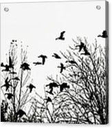Canada Geese Flight Silhouette Acrylic Print