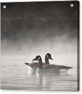 Canada Geese In The Fog Square Acrylic Print