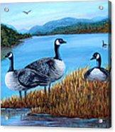 Canada Geese - Lake Lure Acrylic Print