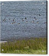 Canada Geese Panorama-signed-8x38 Acrylic Print