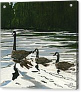 Canadas On Wilson Lake Nc Acrylic Print