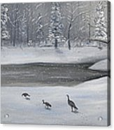 Canadian Geese In Winter Acrylic Print