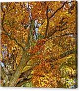 Canadian Tree 2012 Acrylic Print