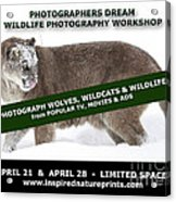 Canadian Wolves Wildcats And Wildlife Photography Workshop Acrylic Print