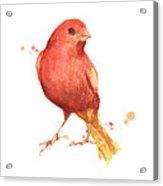 Canary Bird Acrylic Print