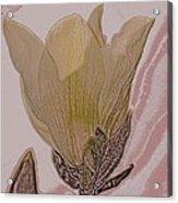Canary Yellow Magnolia Acrylic Print