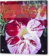 Candy Cane Flower-2 Acrylic Print