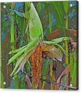 Candy Corn Acrylic Print by Thomas  MacPherson Jr