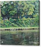 Cane River Acrylic Print by Ellen Howell