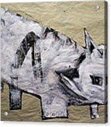 Canis Et Sidera Acrylic Print