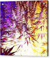 Canna Dusk 1 Small Acrylic Print