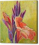 Canna Lily Acrylic Print by Janet Ashworth