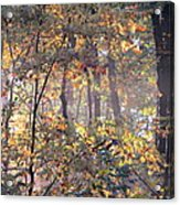 Canopy Collage Acrylic Print