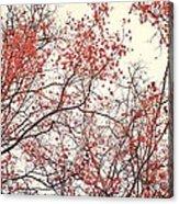 canopy trees II Acrylic Print