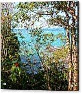 Canopy Vista Acrylic Print