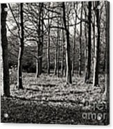 Can't See The Wood For The Trees Acrylic Print